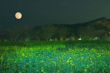 ☆菜の花と月☆