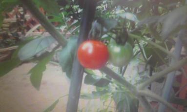 ☆家庭菜園☆ 晴れ